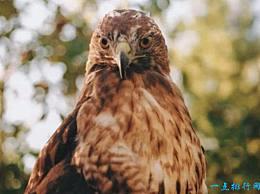 世界十大最危险的鸟类 鹤鸵位居第一