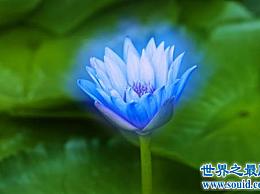 世界上最美的花 没有人能抗拒它们的魅力