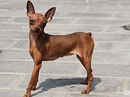 十大最佳宠物狗排名什么样的宠物狗既便宜又容易饲养