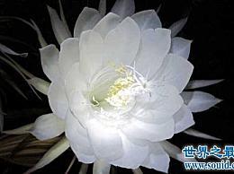 世界上十朵最美丽的花让你惊讶