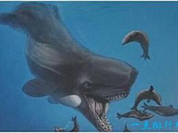史上最凶猛的鲸鱼 利维坦鲸可以捕食须鲸