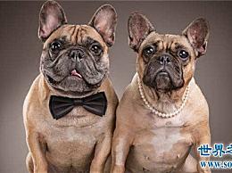 地球上10大最可爱的狗 博美第二金毛第四第一意想不到