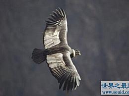 世界上飞行最慢的鸟