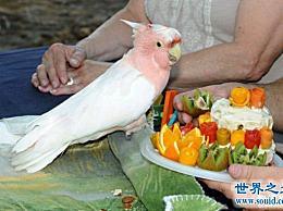 世界上寿命最长的鹦鹉在83岁时仍然健康