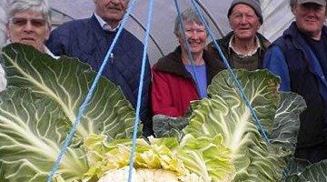 世界上最大的花椰菜打破了最大蔬菜的记录
