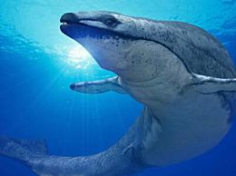 现代鲸鱼的祖先 史前齿鲸(长18米/重15吨)