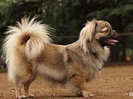 品种名称小宠物狗大全排名最受欢迎的小宠物狗
