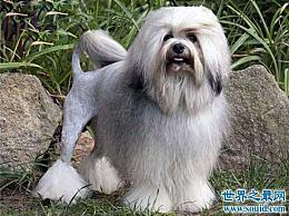世界上最奇怪的狗品种排行榜 第三个你从未见过的!