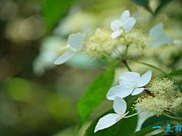 世界上最凄美的花 开到荼蘼花事了