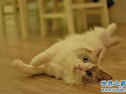 黄油猫悖论的两种解释 用来反驳墨菲定律