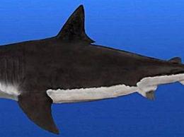 史前时代三大最强大的生物拥有36吨的强大咬合力