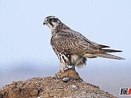 世界上十种最贵的鸟极其稀有 最贵的价值是100万美元
