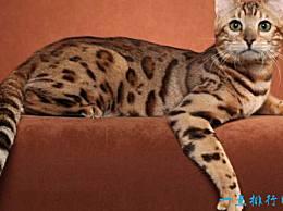 世界上最贵的宠物高达793万元