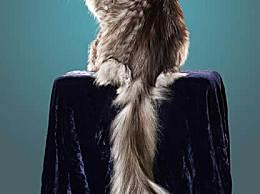 世界上尾巴最长的猫 45厘米长(神奇动物)