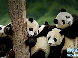 世界十大濒危动物 我一辈子都看不到它们