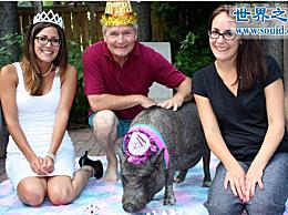 世界上寿命最长的猪 一只活了23年的宠物猪