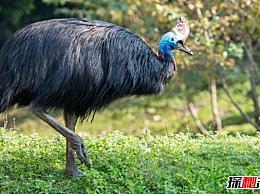 世界十大最凶猛的鸟 第五个喜欢攻击别人的眼睛(不能挑衅)