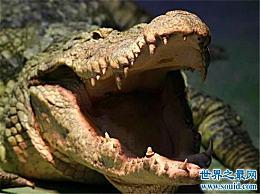 世界十大鳄鱼 这些鳄鱼太大了 以至于把人吓死了!