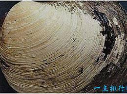 世界上最古老的动物 北极蛤蜊活了507岁