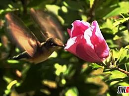 世界上最小的10种鸟类是第四好的筑巢者 第十种产生粉红色的蛋