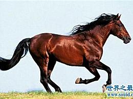 一分钟让你明白什么是世界上最快和最有价值的马