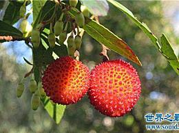 世界十大稀有水果之心西非荔枝果就像一个人的大脑 这很可怕