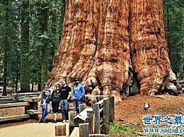 世界上最大的蘑菇 其大小相当于1665个足球场!