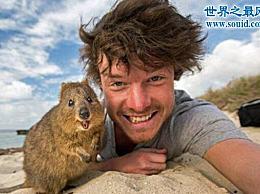 世界上最有趣的动物 短尾袋鼠(澳大利亚的濒危物种)