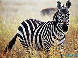 世界最美的十大动物 白虎排第一