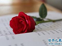什么样的玫瑰语言深深扎根于人们的心中?直男癌症 来为女神学点东西