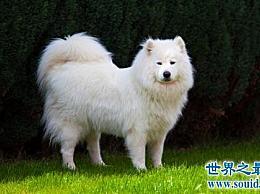 十大适合家庭使用的中型犬 你想保留哪一个?