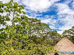 中国在世界上森林覆盖率最高的十个国家中排名第六!