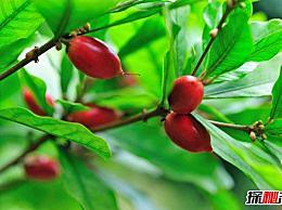 世界十大最稀有的水果是最先变酸变甜的 第九次出现让人想到