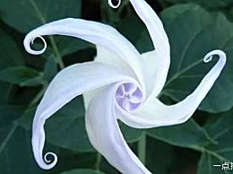 十种只在晚上开放的花是最稀有的