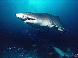 历史上十大最危险的海洋生物 大白鲨 排名倒数第三
