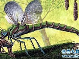 历史上最大的昆虫 世界上有这么大的昆虫!