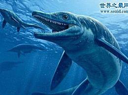 世界上最大的硬骨鱼 27米长的利兹鱼(鲸鲨是它的弟弟)