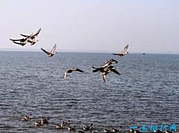 中国五大淡水湖排名中国五大淡水湖是哪五个