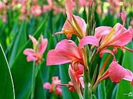 常见的水生植物及其名称是什么
