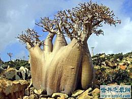 世界上最奇怪的树 它的果实像面包一样吸引着猴子