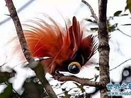世界上最美丽的鸟 世界上最迷人最可爱的鸟