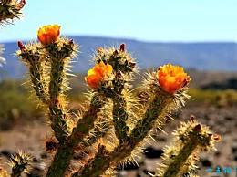 世界十大最美沙漠之美