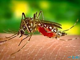 蚊子能活多久?大多数蚊子的寿命只有3-7天