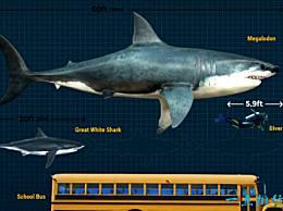 十大史前巨齿鲨