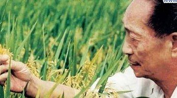 每亩水稻的最高产量是多少?袁隆平的超级杂交稻是1149.02公斤(世