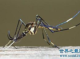 世界上最大的蚊子实际上有半米长 它要吓尿了