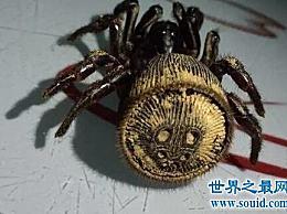 金钱阀蜘蛛的起源是什么?为什么这么受欢迎!