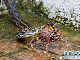 关于蛇的民间传说 庄周的许多梦都与蛇有关