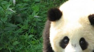 世界上最可爱的动物排名 世界上美丽可爱的动物
