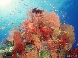 大堡礁 世界上最大的珊瑚礁群 是地球上最美丽的装饰品